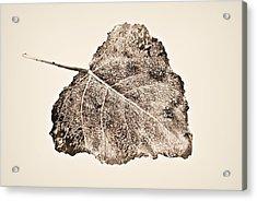 Fallen Leaf In Antique T Acrylic Print by Greg Jackson