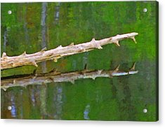 Fallen Tree Acrylic Print by Pat Now