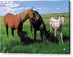 Family Meal Acrylic Print by Terry Reynoldson
