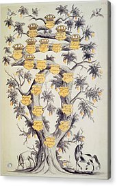 Family Tree Of Javanese Dynasty Acrylic Print by British Library
