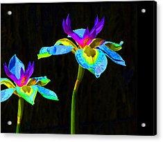 Fantasy Irises 2 Acrylic Print by Margaret Saheed