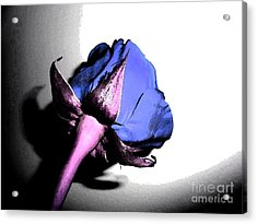 Fantasy Purple And Pink Rose Acrylic Print by Minding My  Visions by Adri and Ray