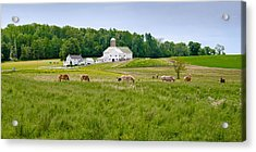 Farm Life Acrylic Print by Guy Whiteley