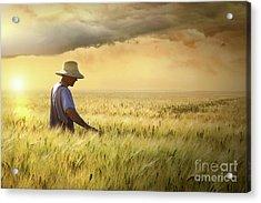 Farmer Checking His Crop Of Wheat  Acrylic Print by Sandra Cunningham