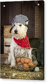 Farmer Dog Acrylic Print by Edward Fielding