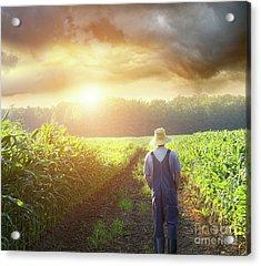 Farmer Walking In Corn Fields At Sunset Acrylic Print by Sandra Cunningham