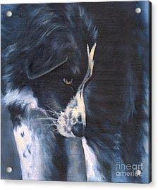 Fascinated Acrylic Print by Linda Shantz