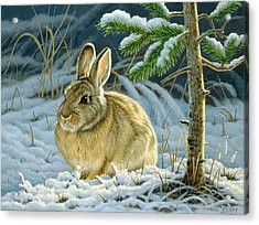 Favorite Place - Bunny Acrylic Print by Paul Krapf