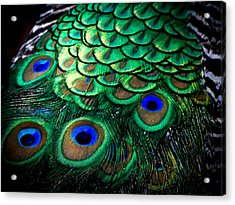 Feather Abstract Acrylic Print by Karen Wiles