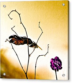 Feather And Carnation Acrylic Print by Bob Orsillo