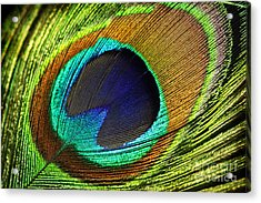 Feather Acrylic Print by Mark Ashkenazi