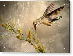 Feathers Acrylic Print by Donna Kennedy