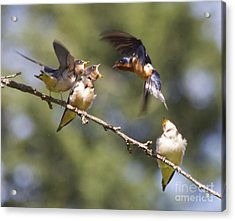 Feeding Time Acrylic Print by Tracey Levine