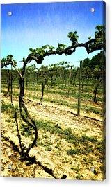 Fenn Valley Vineyards Acrylic Print by Michelle Calkins