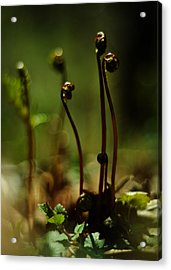 Fern Emergent Acrylic Print by Rebecca Sherman