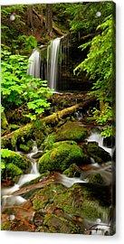 Fern Falls Panoramic Acrylic Print by Leland D Howard