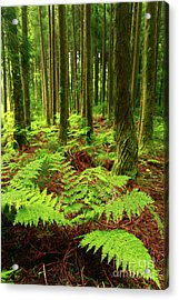 Ferns In The Forest Acrylic Print by Gaspar Avila