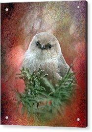 Festive Bushtit Acrylic Print by Angie Vogel