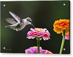 Few And Far Between Acrylic Print by Christina Rollo