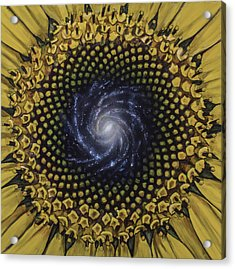 Fibonaccis Mandela V.2 Acrylic Print by Simon Kregar