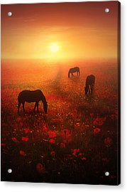 Field Of Dreams Acrylic Print by Jennifer Woodward