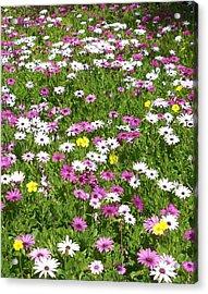 Field Of Flowers Acrylic Print by Deborah  Montana