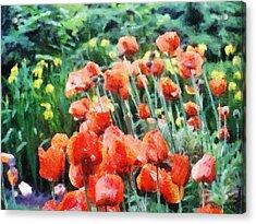 Field Of Flowers Acrylic Print by Jeff Kolker