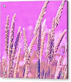 Field Of Grass And Wildflowers Acrylic Print by Artist and Photographer Laura Wrede