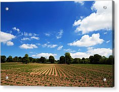 Field Of Potatoes, Near Inistioge Acrylic Print by Panoramic Images