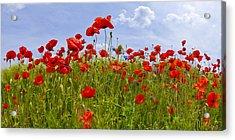 Field Of Red Poppies Acrylic Print by Melanie Viola