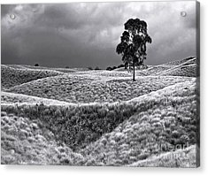 Field Of Saddle Road Dreams Acrylic Print by Ellen Cotton