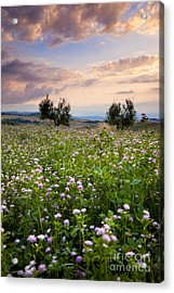 Field Of Wildflowers Acrylic Print by Brian Jannsen
