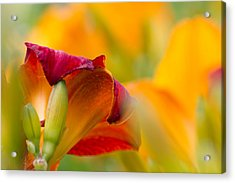 Fiery Flora Acrylic Print by Mary Amerman