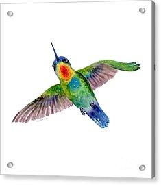 Fiery-throated Hummingbird Acrylic Print by Amy Kirkpatrick
