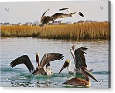 Fighting For A Fish Dinner Acrylic Print by Paulette Thomas