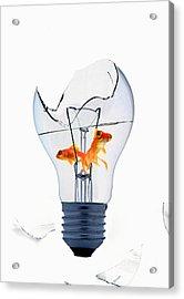 Fine Art Untitled No.26 Acrylic Print by Caio Caldas