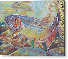 Fine Spotted Cutthroat Trout Acrylic Print by Jenn Cunningham