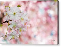 Finest Spring Time Acrylic Print by Hannes Cmarits