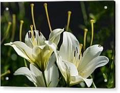 Finishing Blossoming - Featured 3 Acrylic Print by Alexander Senin