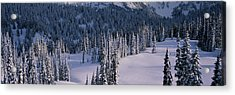 Fir Trees, Mount Rainier National Park Acrylic Print by Panoramic Images