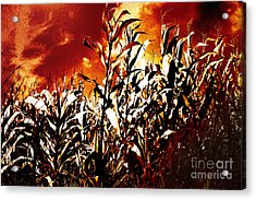 Fire In The Corn Field Acrylic Print by Gaspar Avila