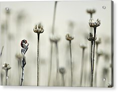 Firm Acrylic Print by Guido Montanes Castillo