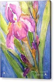 First Bloom Acrylic Print by Sherry Harradence