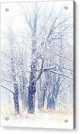 First Snow. Dreamy Wonderland Acrylic Print by Jenny Rainbow