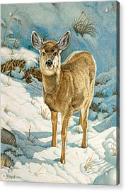 First Winter  - Fawn Acrylic Print by Paul Krapf
