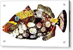 Fish 504-11-13 Marucii Acrylic Print by Marek Lutek
