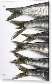 Fish Acrylic Print by Bernard Jaubert