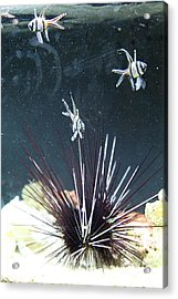 Fish - National Aquarium In Baltimore Md - 1212103 Acrylic Print by DC Photographer