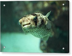Fish - National Aquarium In Baltimore Md - 1212135 Acrylic Print by DC Photographer