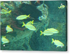 Fish - National Aquarium In Baltimore Md - 1212141 Acrylic Print by DC Photographer